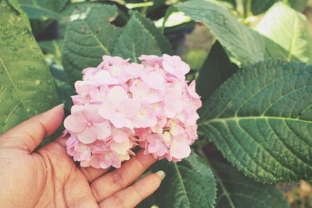 idea comfortable: Selfie of hand with hydrangea flowers