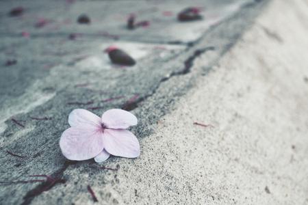 descriptive colours: Hydrangea flowers