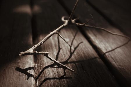 ramas de los árboles con sombra
