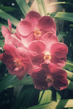 red orchid: Red orchid flowers Stock Photo