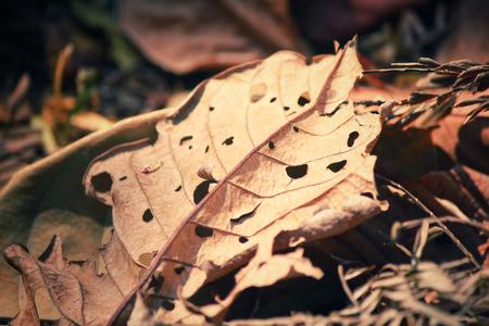 hojas antiguas: Las hojas viejas Foto de archivo