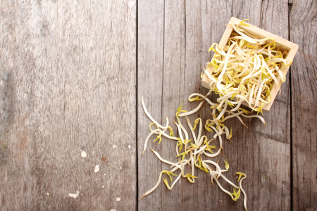 Bean sprouts Imagens - 55578822