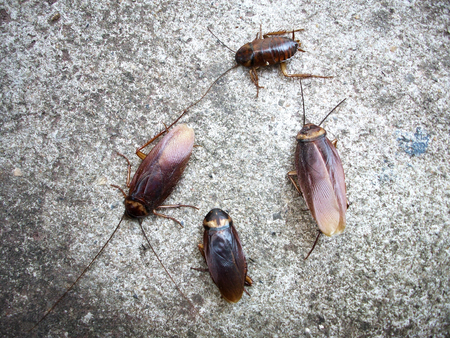revolting: Close up of cockroach
