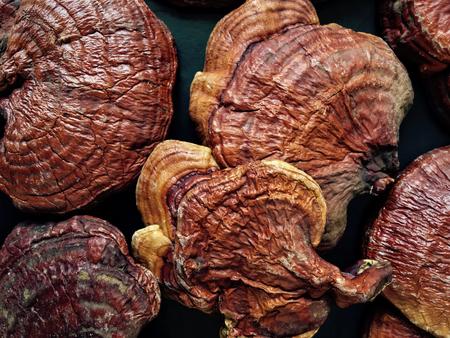 Ganoderma Lucidum - Champignon Ling Zhi. Banque d'images - 67053880