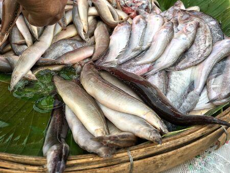 foodstuffs: Fresh fish Stock Photo