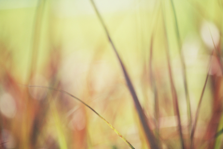 Blurred of vetiver