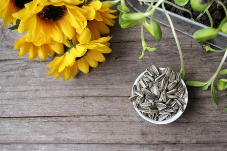 plant seed: Sunflower seed and plant