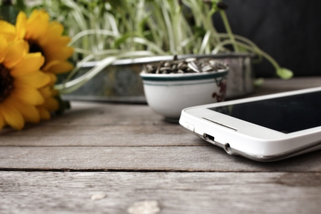 plant seed: Sunflower seed and plant with smart phone