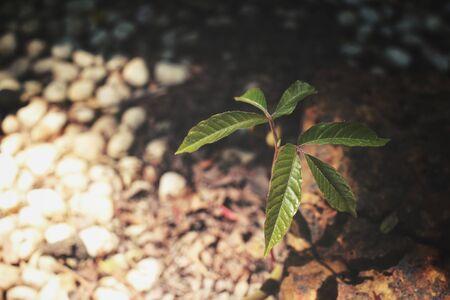 Plant on soil Stock Photo