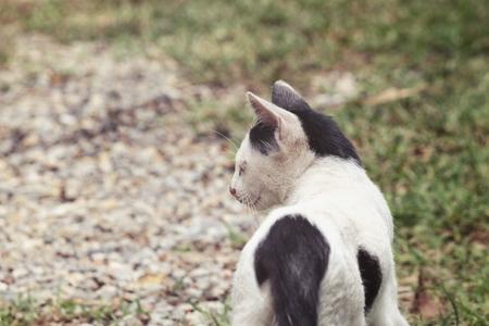 Kitten cat Stock Photo