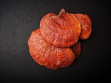 Ganoderma Lucidum - 검정 배경에 링 버섯