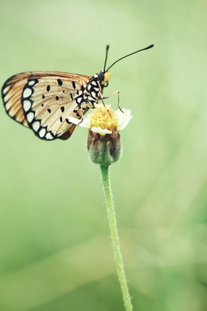 Mooie vlinder op bloem Stockfoto