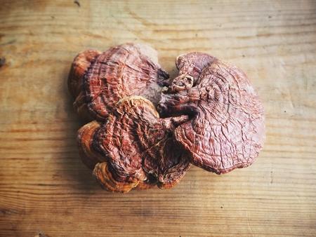 Ganoderma Lucidum - Ling Zhi Mushroom