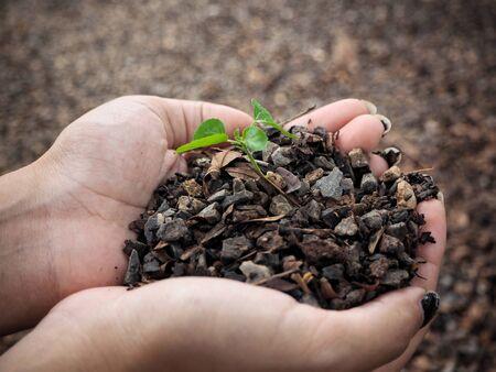 Plant with soil on hands Banco de Imagens