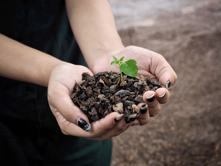 Plant with soil on hands Фото со стока