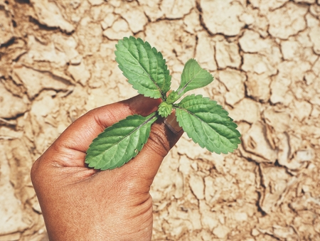 Plant on hand with cracked dry soil