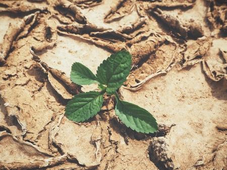 Plant on cracked dry soil