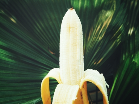Banana with plam leaves Stock Photo