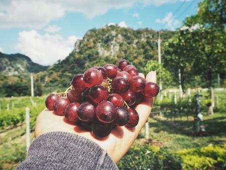 Selfie of grapes on hand in vineyard