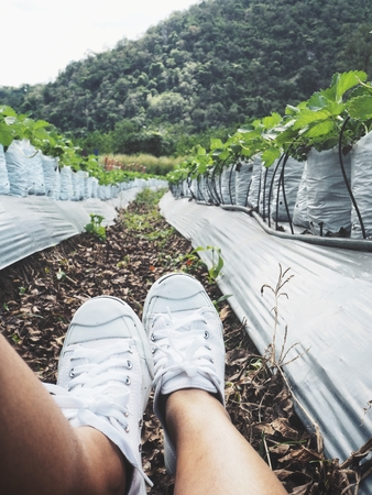 Selfie of sneakers with vegetable farm