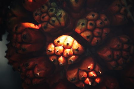 Close up of pandanus fruit Stock Photo