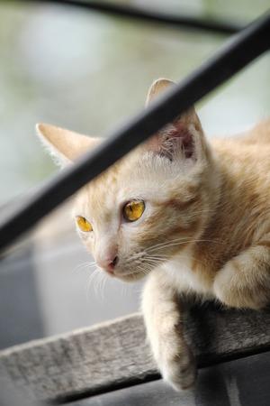 Baby ginger cat Stock Photo