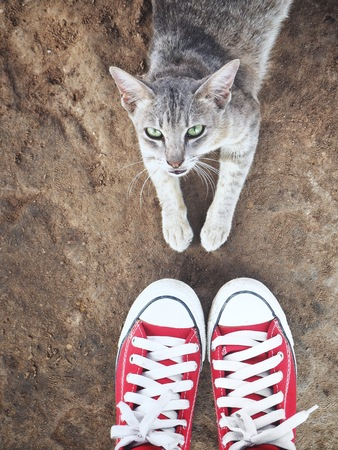 Selfie of red sneakers and cat 스톡 콘텐츠