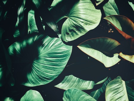 Beautiful of green tropical leaves