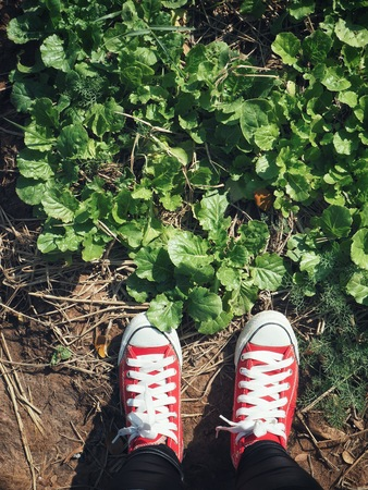 Selfie of red sneakers lifestyle in the vegetable garden 스톡 콘텐츠