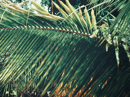 Beautiful of coconut palm tropical leaves 스톡 콘텐츠