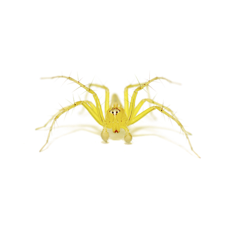 arachnoid: Spider on white background Stock Photo