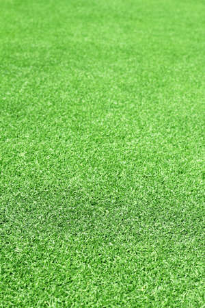 grassy plot: green lawn background Stock Photo