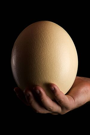 avestruz: Avestruces de huevo sobre fondo oscuro Foto de archivo