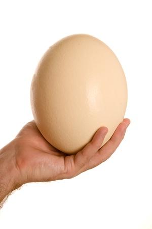 avestruz: Huevo de avestruz Foto de archivo