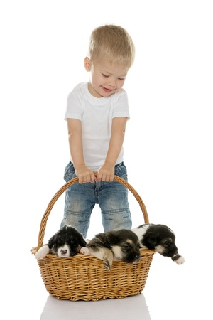 Happy boy with puppies in a basket  isolated on white background