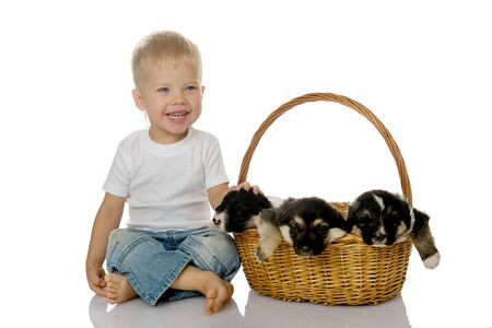 The laughing child with a basket of puppies  isolated on white background  photo