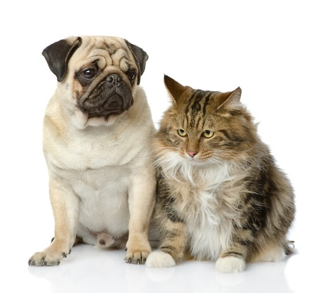 maine cat: Cat and dog looking away  isolated on white background Stock Photo