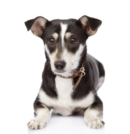 ojos tristes: perro acostado frente aislado en fondo blanco