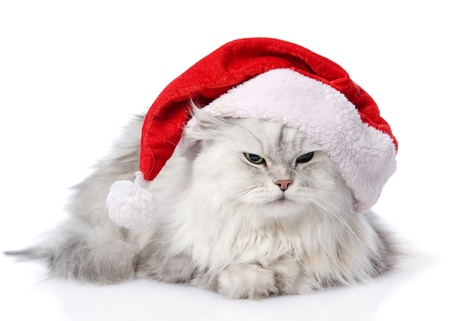 christmas cat in red Santa Claus cap isolated on a white background photo
