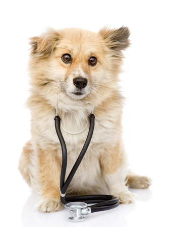 dog with a stethoscope on his neck  isolated on white background photo