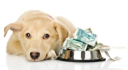 needing: sad puppy needing the help  isolated on white background