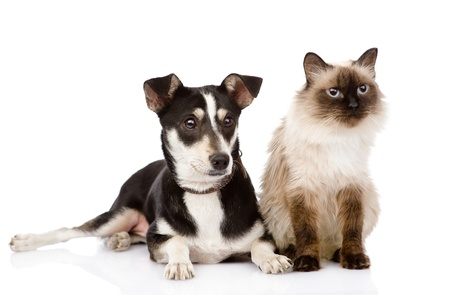 cat and puppy sitting in front  looking away  isolated on white background Stock Photo - 20902009