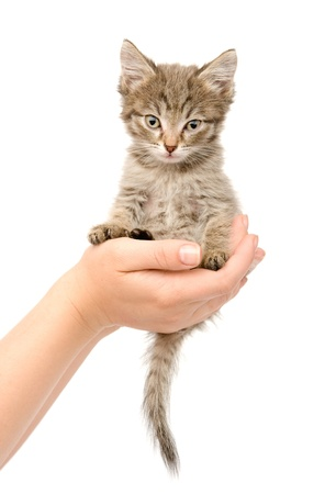 kitten sitting on a palm  isolated on white background photo