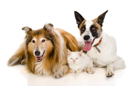 pet care: two adult dogs and tiny kitten  isolated on white background Stock Photo
