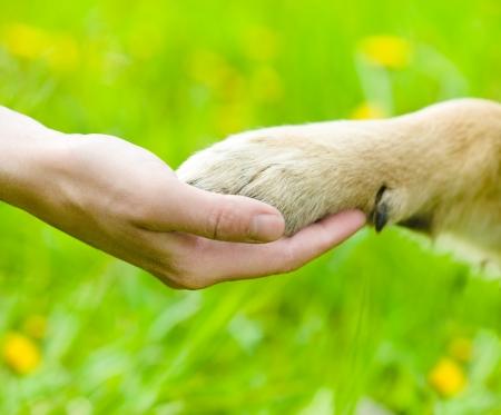 genegenheid: Vriendschap tussen mens en hond - schudden hand en poot Stockfoto