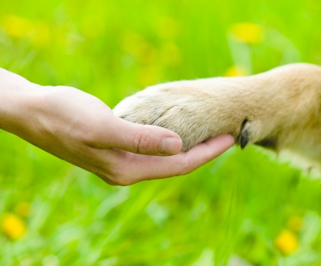 Friendship between human and dog - shaking hand and paw
