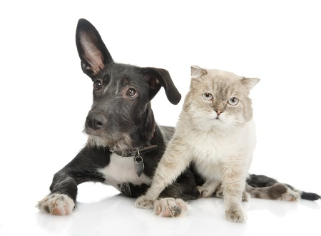 cat and dog looking at camera  isolated on white background photo