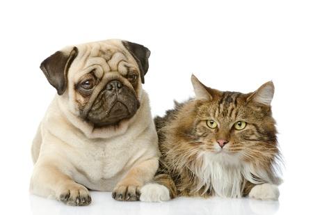 gato jugando: el gato se encuentra cerca de un perro aislado en fondo blanco