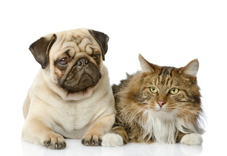 the cat lies near a dog  isolated on white background