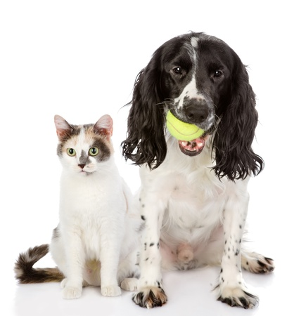 cat playing: dog and cat  looking at camera  isolated on white background